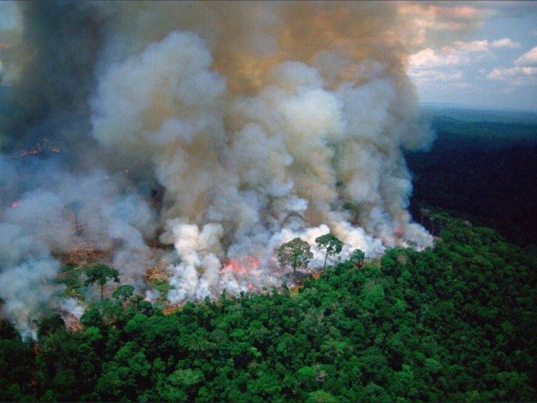 amazonas-arden-los-pulmones-del-planeta-203971-1_768.jpg